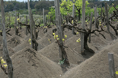 02232011etna_vineyard